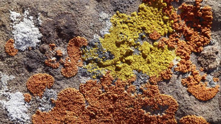 Lichen-plan : les remèdes naturels