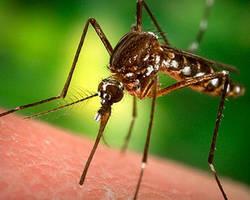 Insectifuges, mieux vaut se laisser piquer
