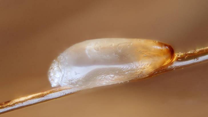 Un traitement anti-poux 100% naturel