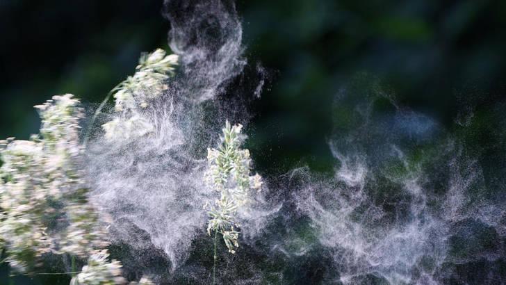 Histacalm contre les allergies saisonnières