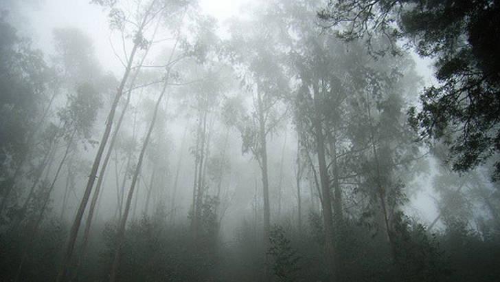 Un diffusuer pour faire entrer la nature chez vous