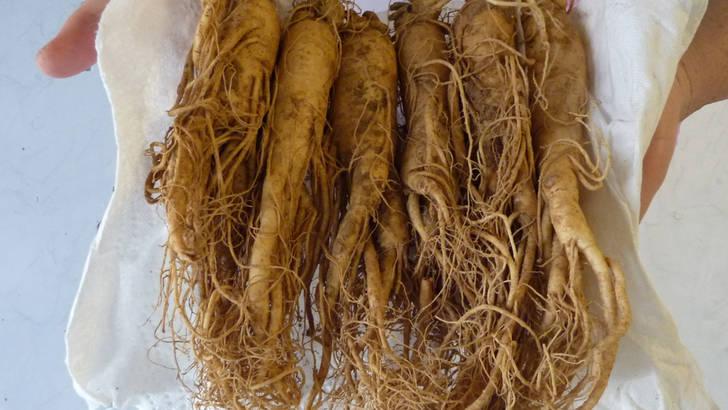 Ginseng : des différences considérables de qualité