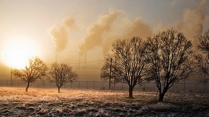 Pollution et plantes