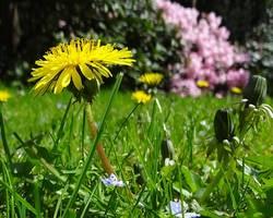 Les cures de printemps en médecine douce